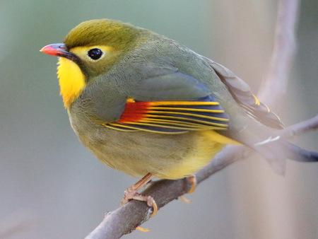 小鳥[1]